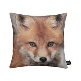 BY NORD -  COUSSIN RENARD/FOX